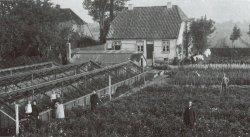 """Der Betrieb von Wilhelm Kordes I. in Elmshorn: Seine 1887 gegründete Firma begann die Rosenzucht im großen Stil, die Holstein im 20. Jahrhundert zum """"Rosenland"""" werden ließ"""