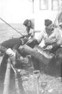 Die Husumer Fischer Kurt und Peter Laß (rechts) sowie ein Helfer beim Sieben