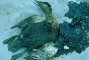 Ölpest-Opfer