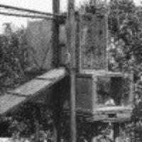 Beitragsbild für Vogelwarte Helgoland