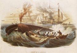 """Der französische Stahlstich von 1840 zeigt zwar den Walfang in den Südmeeren, doch sind sowohl Jagd als auch das """"Flensen"""" gut zu erkennen"""